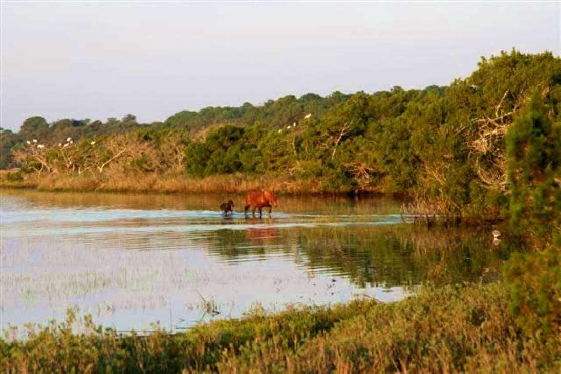 Little Horse Island South Carolina United States